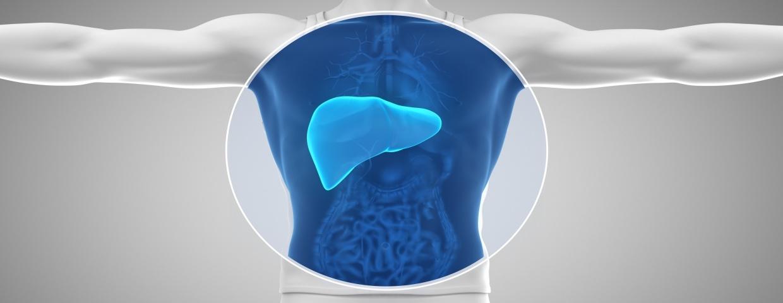 liver imaging